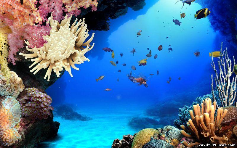 Подводный мир океана 1 04a